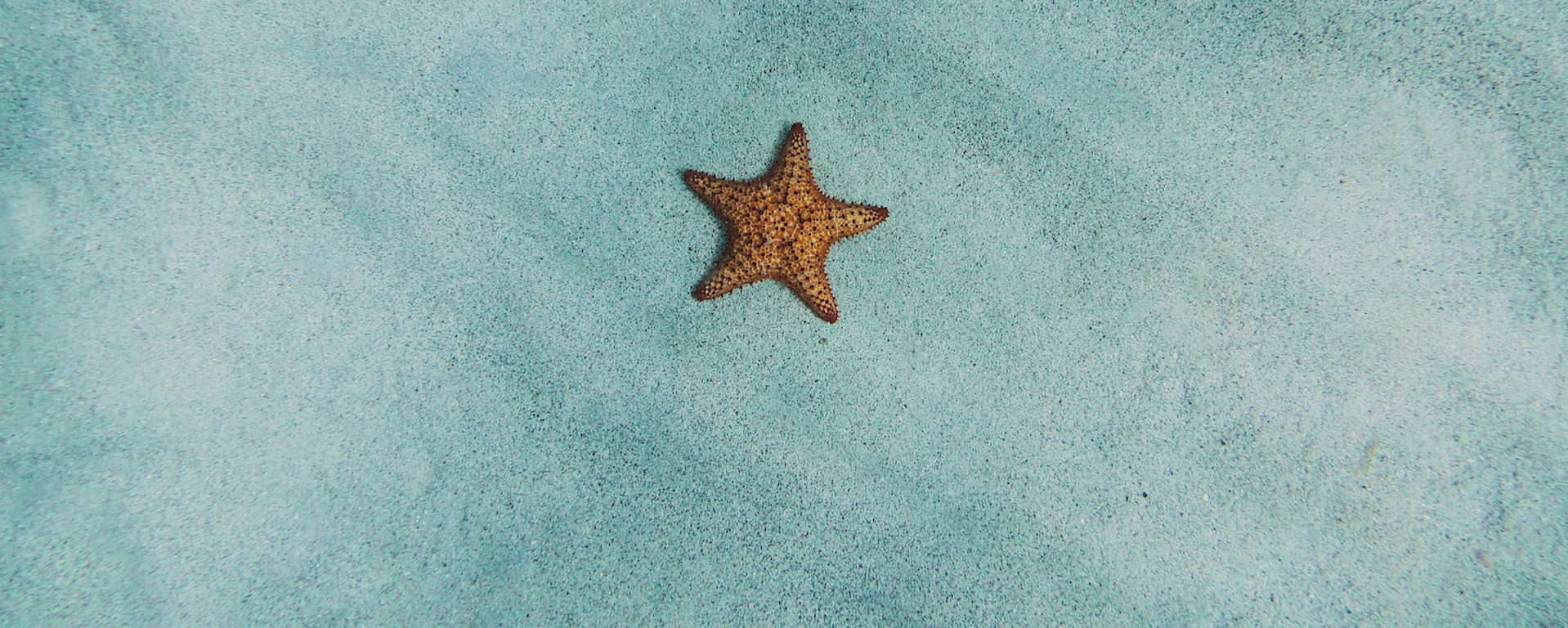 Smal starfish lying on the ocean bottom in shallow water
